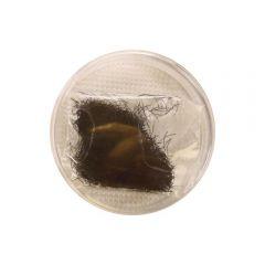 Thuya Extensii Gene 12mm 0.5g